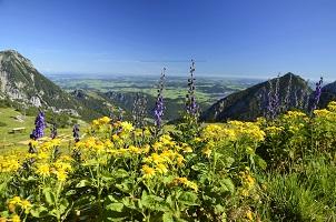 Blumenpracht im Tannheimer Tal
