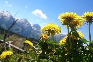 Berggenuss mit wanderauszeit