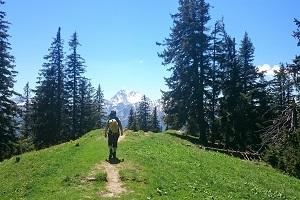 Wandern und Natur - hier im Tannheimer Tal mit wanderauszeit
